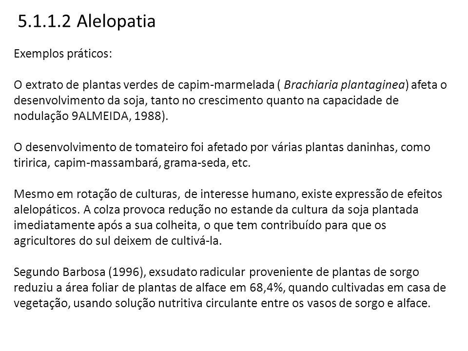 5.1.1.2 Alelopatia Exemplos práticos: O extrato de plantas verdes de capim-marmelada ( Brachiaria plantaginea) afeta o desenvolvimento da soja, tanto
