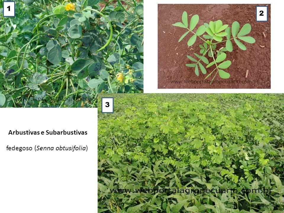 4.4 Quanto ao Ciclo de Vida As plantas daninhas podem ser classificadas como monocárpicas ou policárpicas.