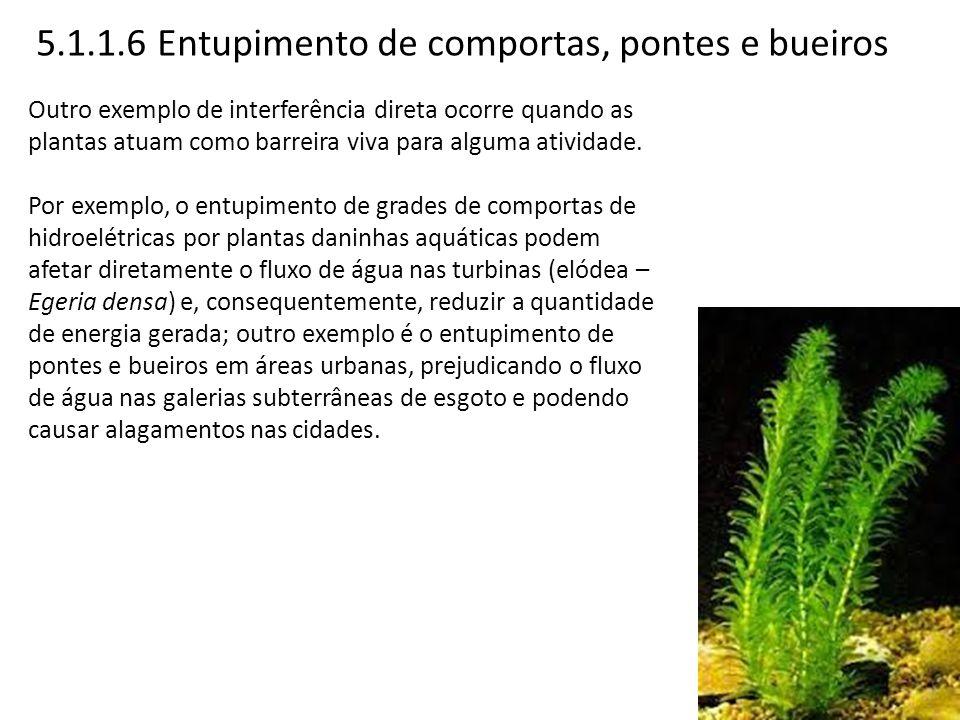 5.1.1.6 Entupimento de comportas, pontes e bueiros Outro exemplo de interferência direta ocorre quando as plantas atuam como barreira viva para alguma