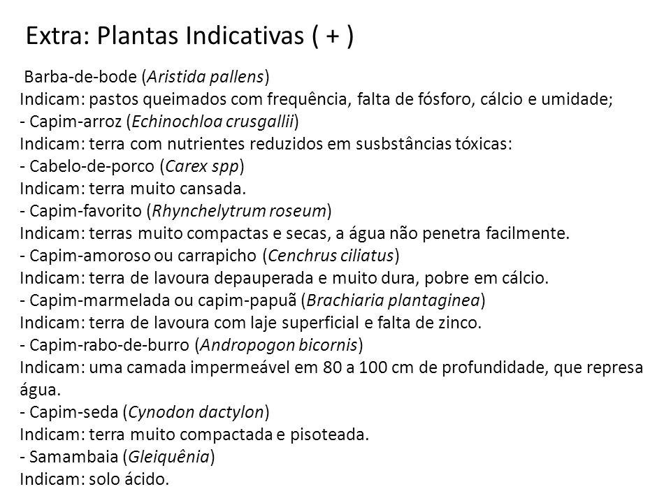 Barba-de-bode (Aristida pallens) Indicam: pastos queimados com frequência, falta de fósforo, cálcio e umidade; - Capim-arroz (Echinochloa crusgallii)