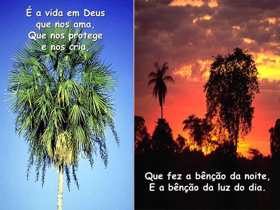 É a vida em Deus que nos ama, Que nos protege e nos cria, Que fez a bênção da noite, E a bênção da luz do dia.