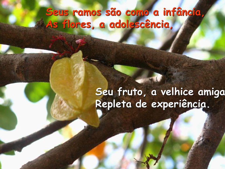 Seu fruto, a velhice amiga Repleta de experiência.