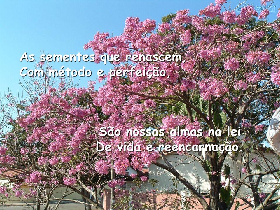 As sementes que renascem, Com método e perfeição, São nossas almas na lei De vida e reencarnação.