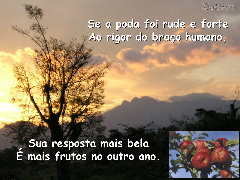 Se a poda foi rude e forte Ao rigor do braço humano, Sua resposta mais bela É mais frutos no outro ano.