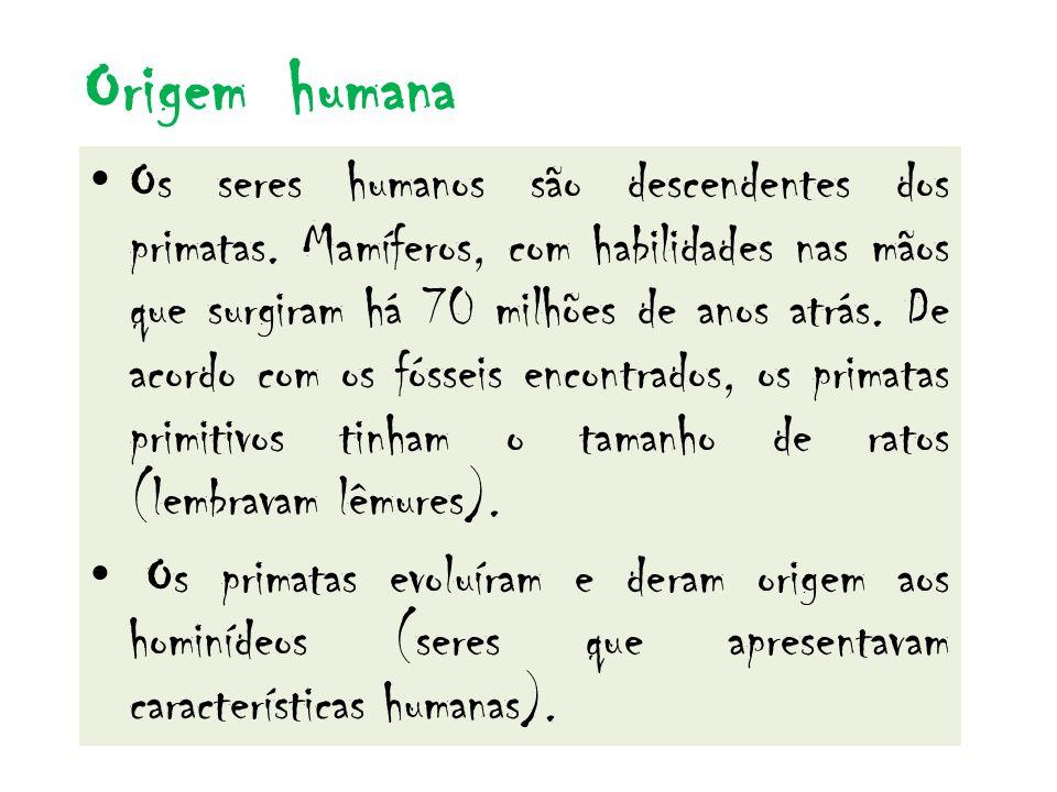 Origem humana Os seres humanos são descendentes dos primatas. Mamíferos, com habilidades nas mãos que surgiram há 70 milhões de anos atrás. De acordo