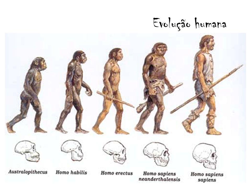 O mais antigos fóssil de Homo sapiens foi datado com 120 mil anos.