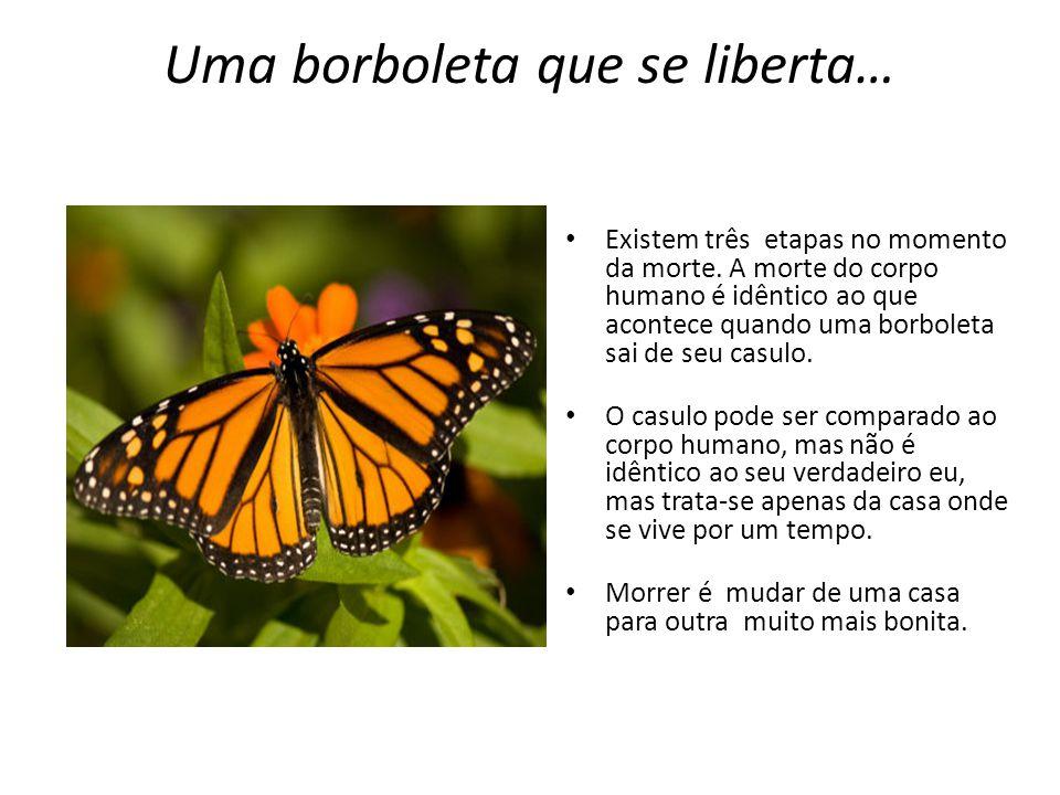 Uma borboleta que se liberta… Existem três etapas no momento da morte. A morte do corpo humano é idêntico ao que acontece quando uma borboleta sai de