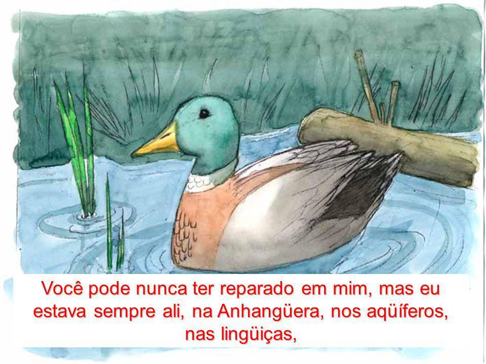 Você pode nunca ter reparado em mim, mas eu estava sempre ali, na Anhangüera, nos aqüíferos, nas lingüiças,