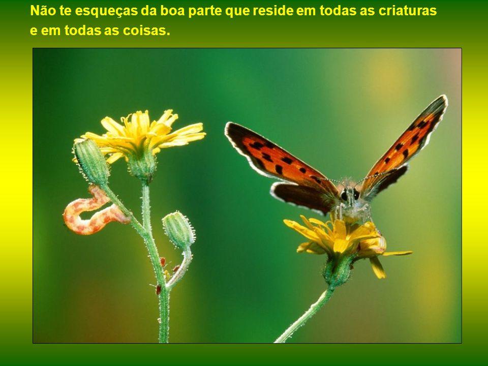 A repulsiva lagarta, exemplo emblemático da Natureza para os que não vêem belezas em estado potencial.