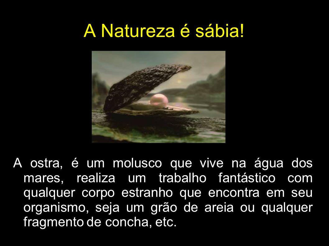 A Natureza é sábia.
