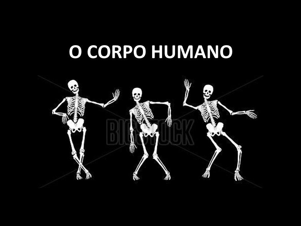 O corpo humano é constituído por... Células;