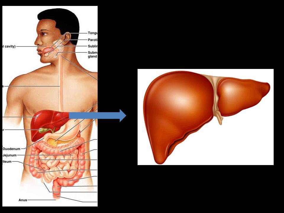 MEMBRANA PLASMÁTICA - Película que envolve as células; - Controla o que entra e o que sai delas.