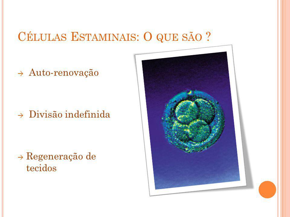 C ÉLULAS E STAMINAIS : O QUE SÃO ? Auto-renovação Divisão indefinida Regeneração de tecidos