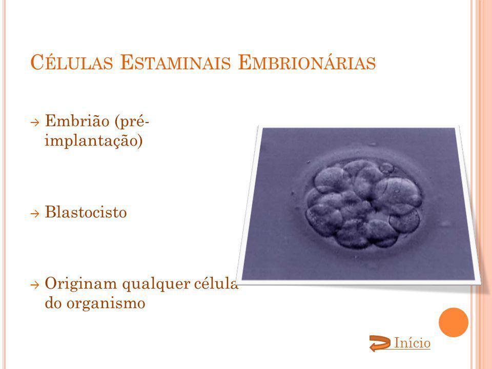 C ÉLULAS E STAMINAIS E MBRIONÁRIAS Embrião (pré- implantação) Blastocisto Originam qualquer célula do organismo Início