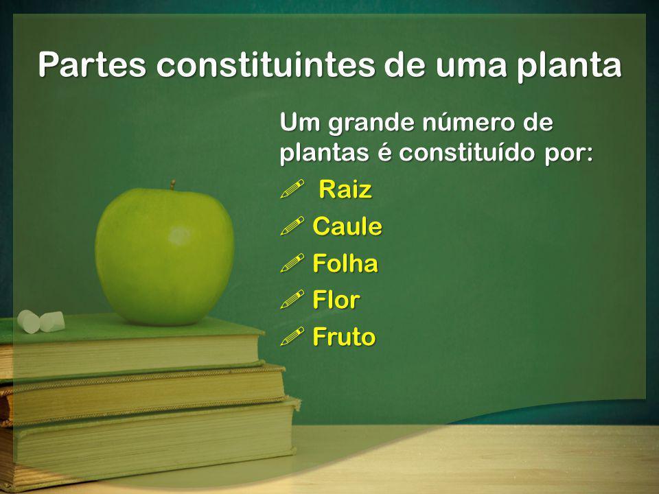 Partes constituintes de uma planta Um grande número de plantas é constituído por: Raiz Raiz Caule Caule Folha Folha Flor Flor Fruto Fruto