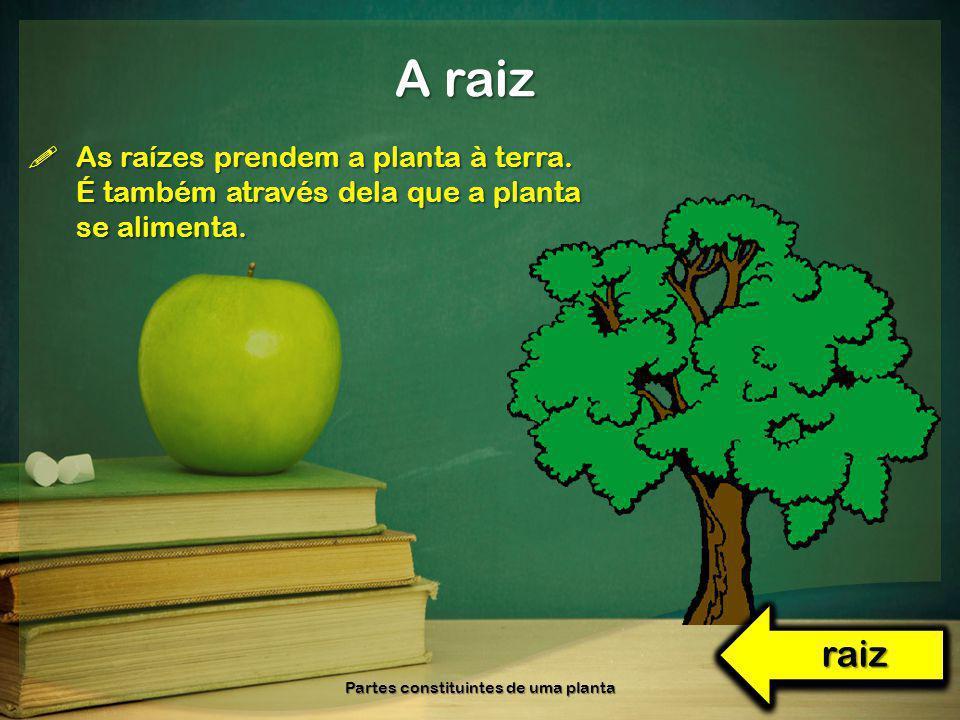 As raízes prendem a planta à terra. É também através dela que a planta se alimenta. As raízes prendem a planta à terra. É também através dela que a pl