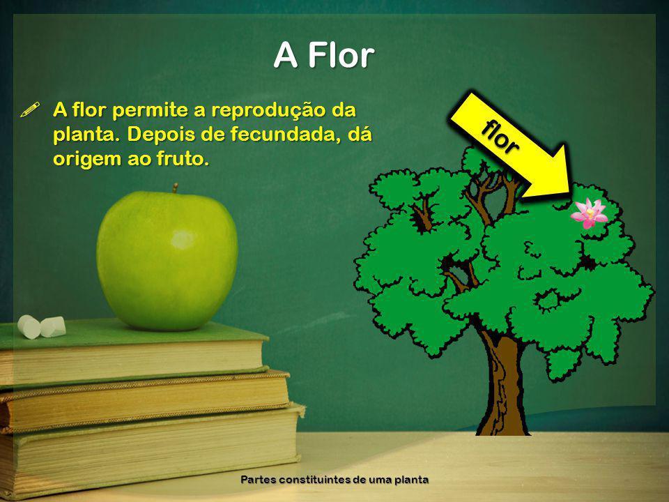 A flor permite a reprodução da planta. Depois de fecundada, dá origem ao fruto. A flor permite a reprodução da planta. Depois de fecundada, dá origem
