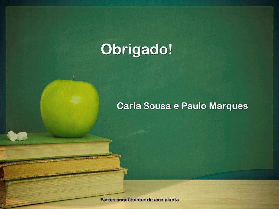 Obrigado! Carla Sousa e Paulo Marques Partes constituintes de uma planta