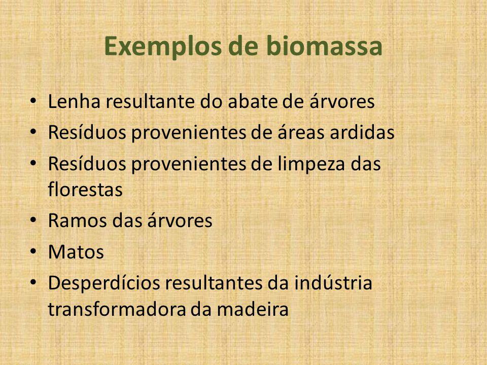 Exemplos de biomassa Lenha resultante do abate de árvores Resíduos provenientes de áreas ardidas Resíduos provenientes de limpeza das florestas Ramos