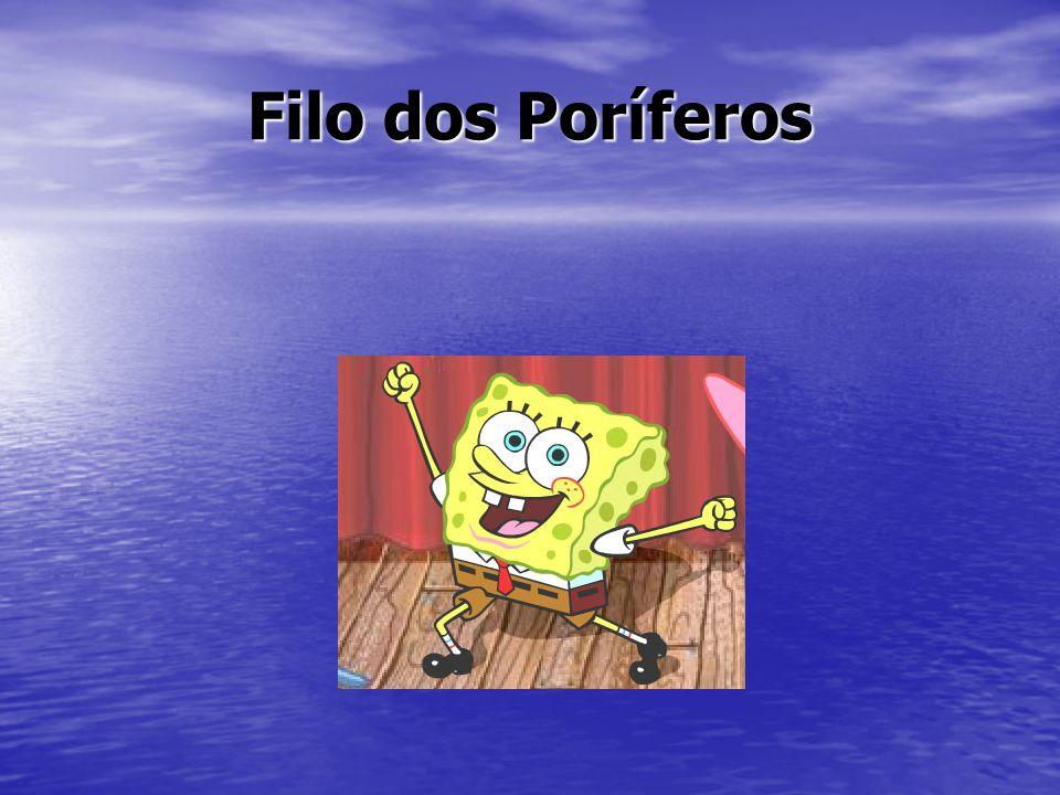 O nome vem do latim: porus = poros + fera = portador de O nome vem do latim: porus = poros + fera = portador de São conhecidos também como esponjas ou animais filtradores.