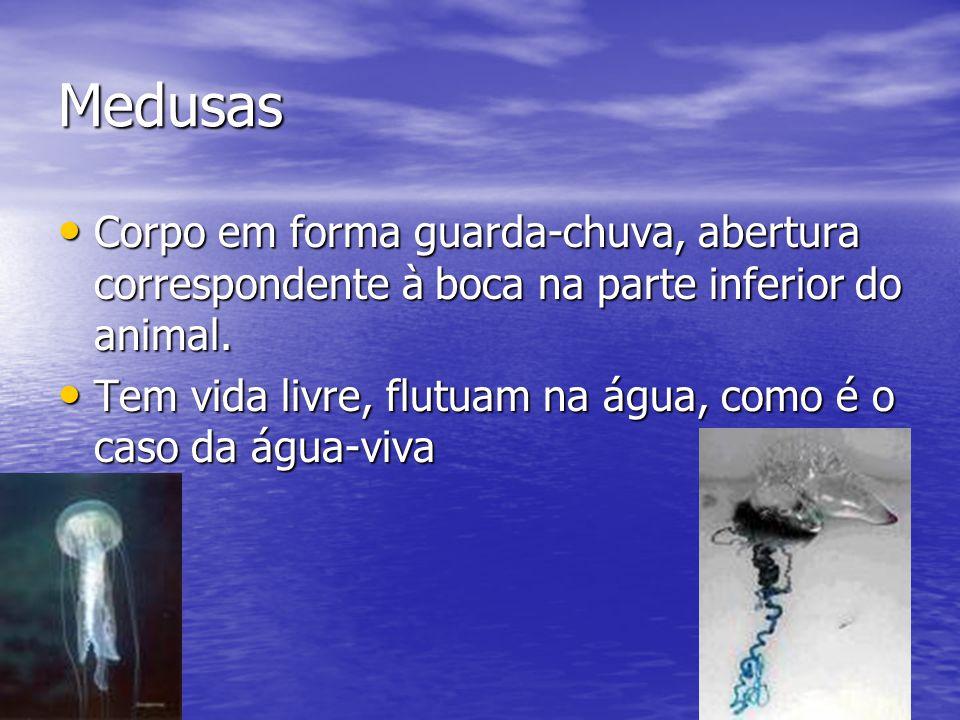 Medusas Corpo em forma guarda-chuva, abertura correspondente à boca na parte inferior do animal. Corpo em forma guarda-chuva, abertura correspondente