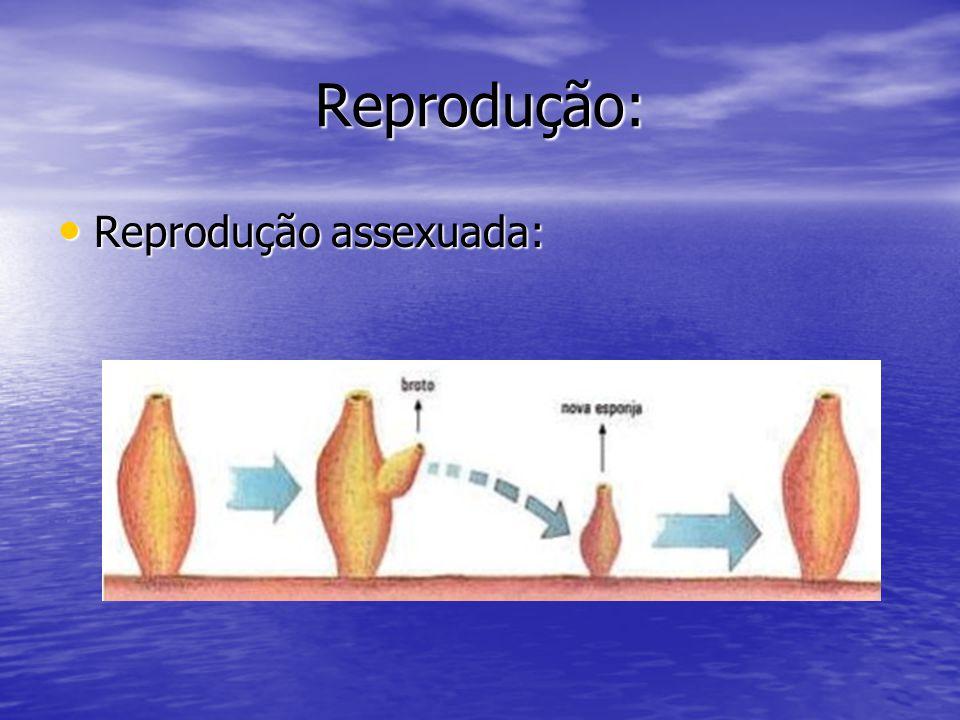 Reprodução: Reprodução assexuada: Reprodução assexuada: