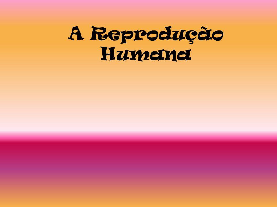 A Reprodução Humana