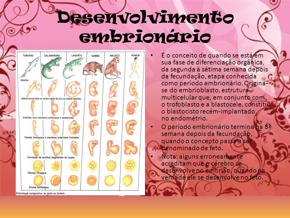 Desenvolvimento embrionário É o conceito de quando se está em sua fase de diferenciação orgânica, da segunda à sétima semana depois da fecundação, eta