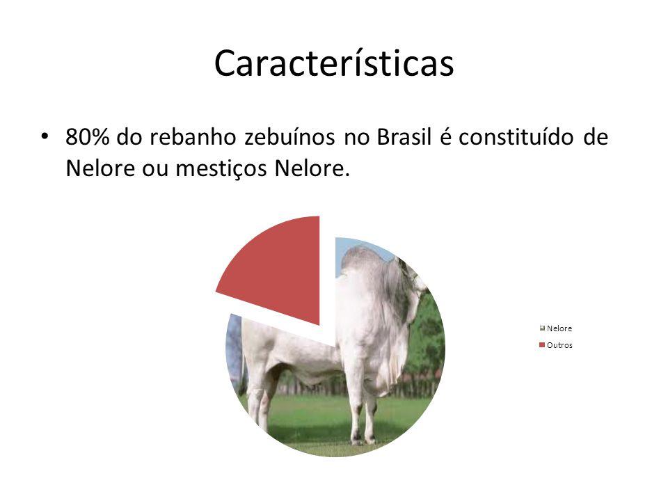 Características 80% do rebanho zebuínos no Brasil é constituído de Nelore ou mestiços Nelore.