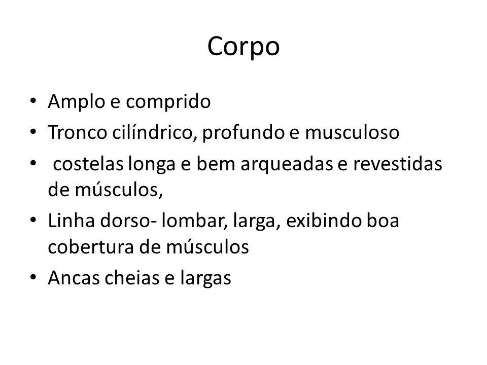 Corpo Amplo e comprido Tronco cilíndrico, profundo e musculoso costelas longa e bem arqueadas e revestidas de músculos, Linha dorso- lombar, larga, ex