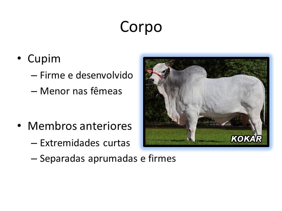 Corpo Cupim – Firme e desenvolvido – Menor nas fêmeas Membros anteriores – Extremidades curtas – Separadas aprumadas e firmes