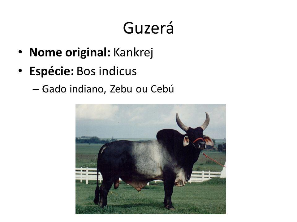 Nome original: Kankrej Espécie: Bos indicus – Gado indiano, Zebu ou Cebú