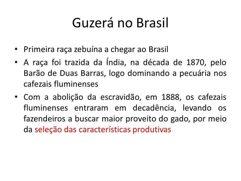 Guzerá no Brasil Primeira raça zebuína a chegar ao Brasil A raça foi trazida da Índia, na década de 1870, pelo Barão de Duas Barras, logo dominando a