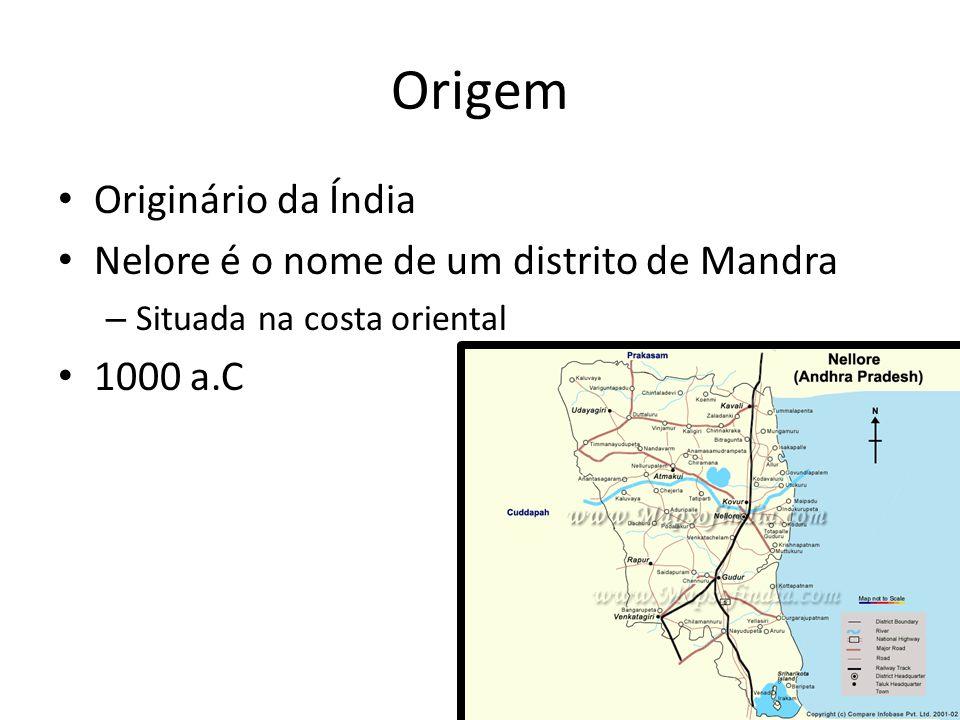 Origem Originário da Índia Nelore é o nome de um distrito de Mandra – Situada na costa oriental 1000 a.C