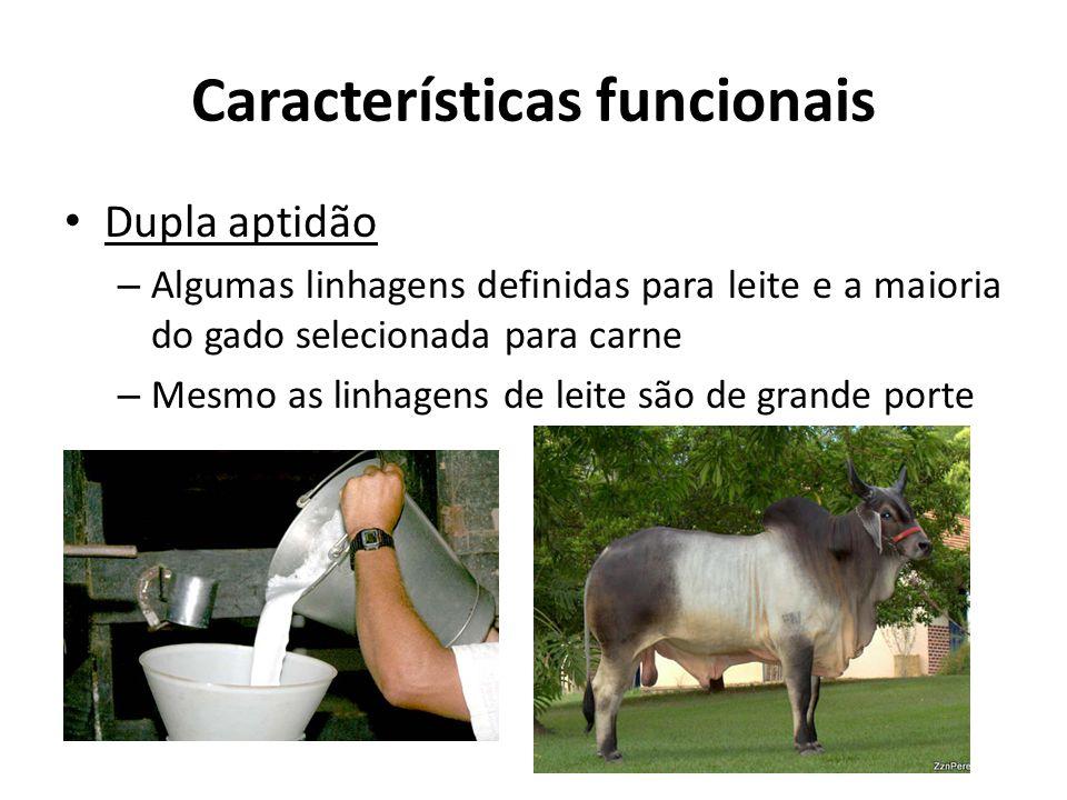 Características funcionais Dupla aptidão – Algumas linhagens definidas para leite e a maioria do gado selecionada para carne – Mesmo as linhagens de l