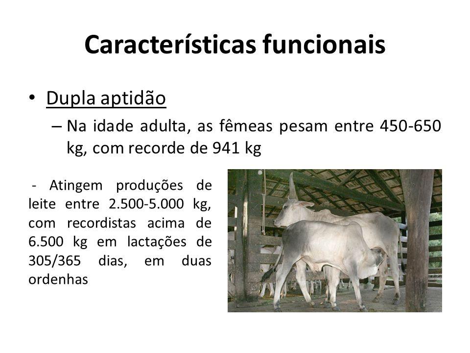Características funcionais Dupla aptidão – Na idade adulta, as fêmeas pesam entre 450-650 kg, com recorde de 941 kg - Atingem produções de leite entre