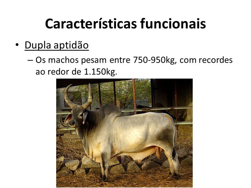 Características funcionais Dupla aptidão – Os machos pesam entre 750-950kg, com recordes ao redor de 1.150kg.