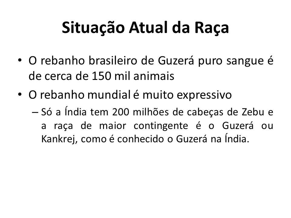 Situação Atual da Raça O rebanho brasileiro de Guzerá puro sangue é de cerca de 150 mil animais O rebanho mundial é muito expressivo – Só a Índia tem