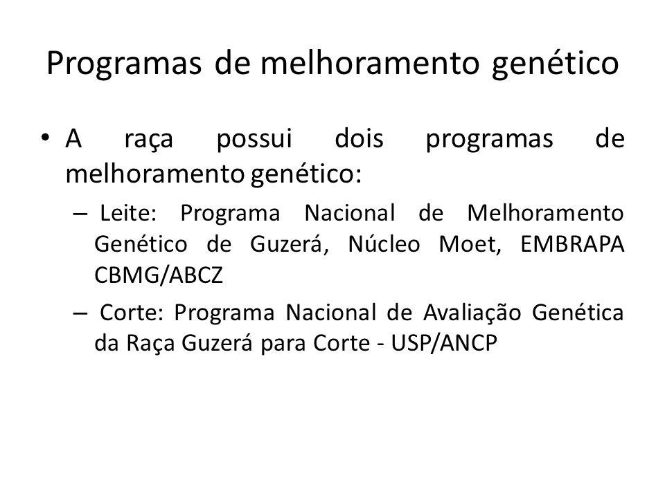 Programas de melhoramento genético A raça possui dois programas de melhoramento genético: – Leite: Programa Nacional de Melhoramento Genético de Guzer