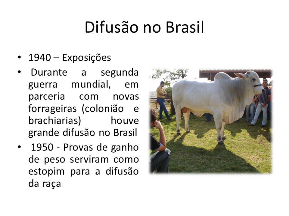Difusão no Brasil 1960 – Busca de mais exemplares indianos com o objetivo do melhoramento genético 1970 - 1980 – Governo incentiva a implantação de mais de 1500 propriedades criadoras de Nelore totalizando 2,5 milhões de animais