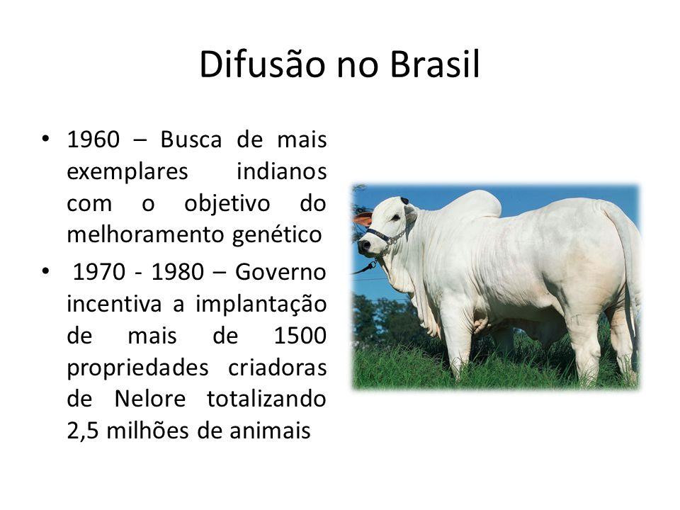 Difusão no Brasil 1960 – Busca de mais exemplares indianos com o objetivo do melhoramento genético 1970 - 1980 – Governo incentiva a implantação de ma