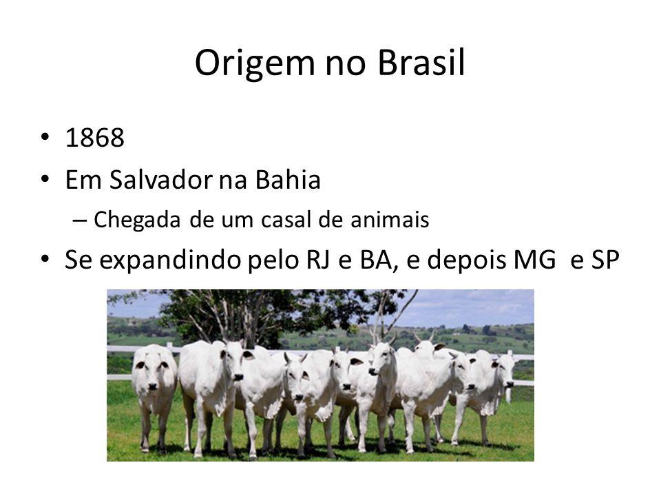 Difusão no Brasil Nelore chega a 70% do rebanho nacional Diferencial - Grande capacidade de parto Raça com maior contingente pesquisado até hoje 1984 – registro genealógico 1999 – Dispensam-se as variedades