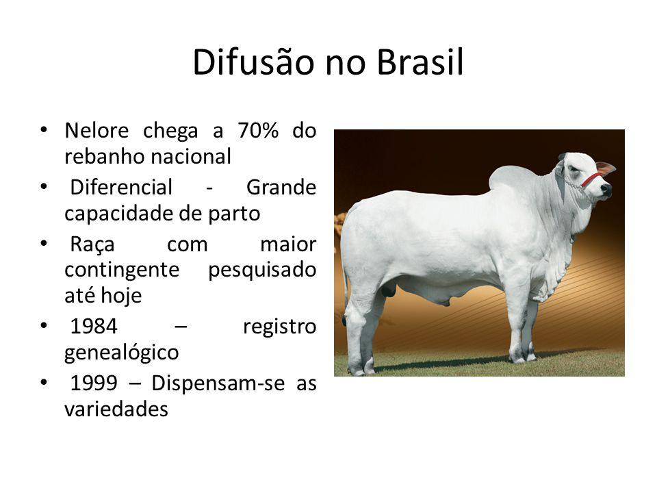 Difusão no Brasil Nelore chega a 70% do rebanho nacional Diferencial - Grande capacidade de parto Raça com maior contingente pesquisado até hoje 1984