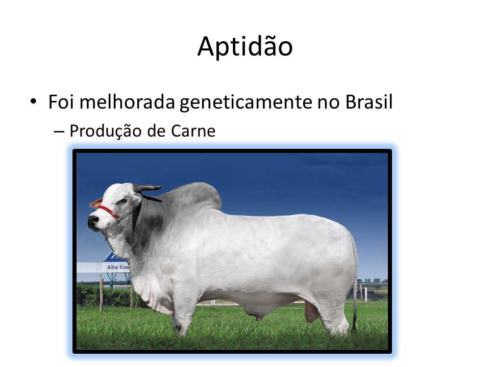 Guzerá no Brasil Região Norte tem 2% da raça Região Nordeste tem 41% Sudeste tem 44% Sul tem 1% e; Centro-Oeste tem 12%