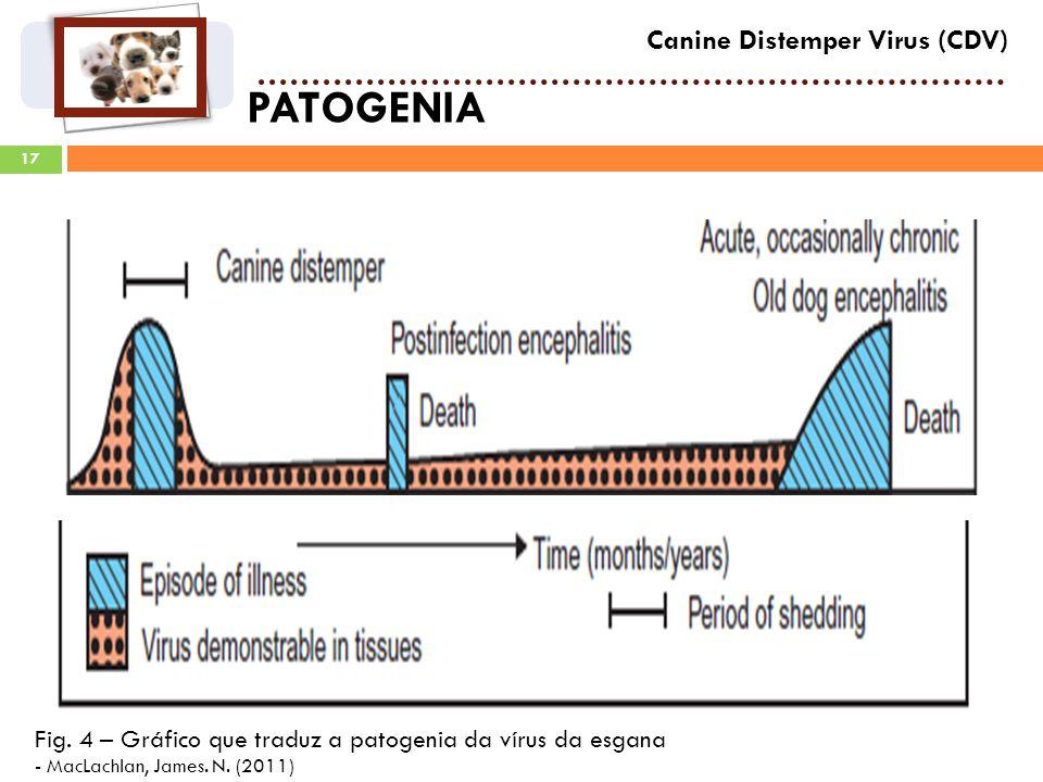17 PATOGENIA Canine Distemper Virus (CDV) Fig.