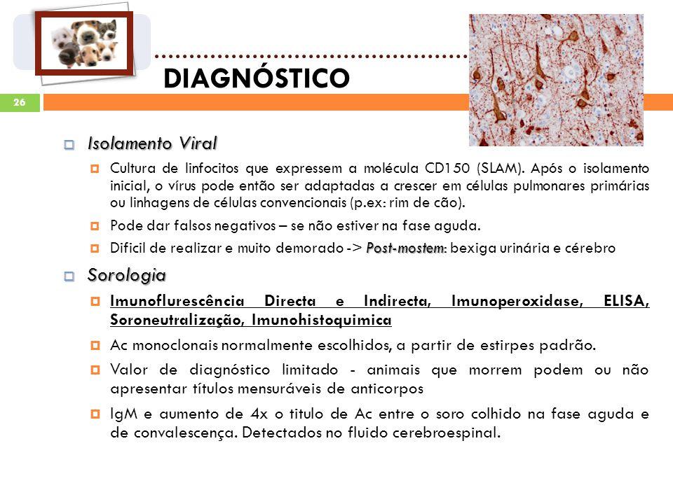 26 DIAGNÓSTICO Isolamento Viral Isolamento Viral Cultura de linfocitos que expressem a molécula CD150 (SLAM).