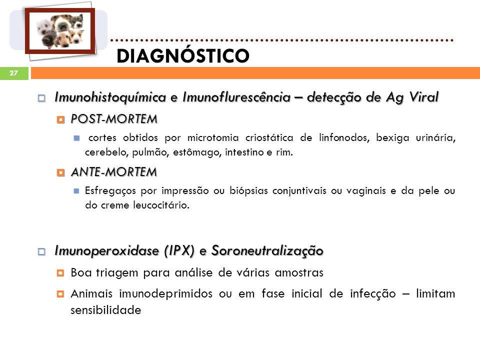27 DIAGNÓSTICO Imunohistoquímica e Imunoflurescência – detecção de Ag Viral Imunohistoquímica e Imunoflurescência – detecção de Ag Viral POST-MORTEM POST-MORTEM cortes obtidos por microtomia criostática de linfonodos, bexiga urinária, cerebelo, pulmão, estômago, intestino e rim.