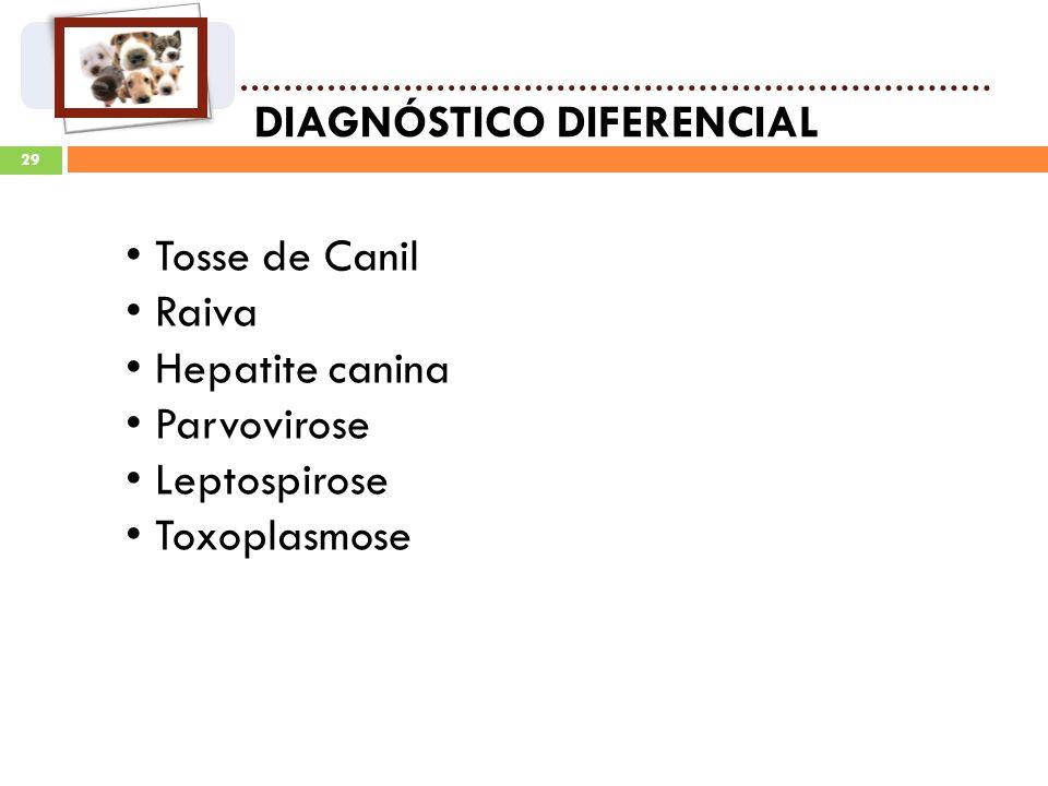 29 DIAGNÓSTICO DIFERENCIAL Tosse de Canil Raiva Hepatite canina Parvovirose Leptospirose Toxoplasmose