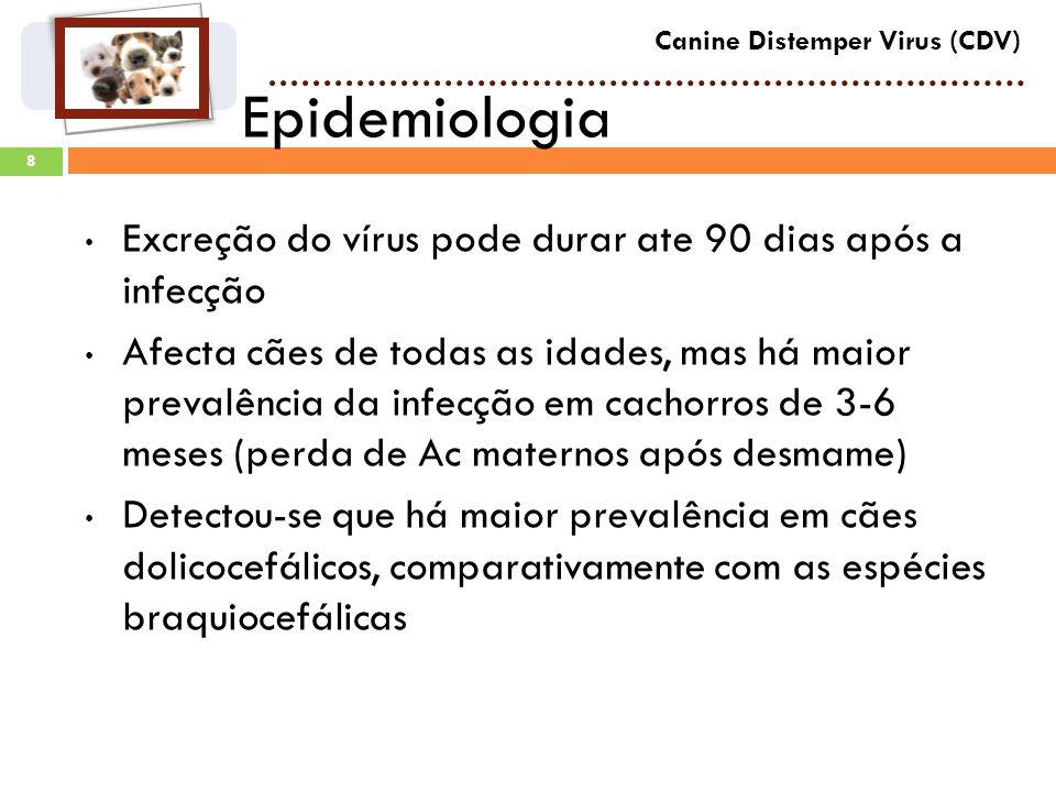 8 Epidemiologia Canine Distemper Virus (CDV) Excreção do vírus pode durar ate 90 dias após a infecção Afecta cães de todas as idades, mas há maior prevalência da infecção em cachorros de 3-6 meses (perda de Ac maternos após desmame) Detectou-se que há maior prevalência em cães dolicocefálicos, comparativamente com as espécies braquiocefálicas