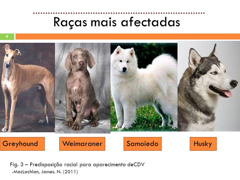 9 Raças mais afectadas Greyhound Weimaraner Samoiedo Husky Fig.